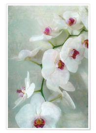 Premium poster Composition of a white orchid with transparent texture