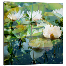 Aluminium print  Montage of white water lilies - Alaya Gadeh