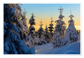 Premium poster Snow-covered spruce trees at sunrise on Wurmberg in the Harz