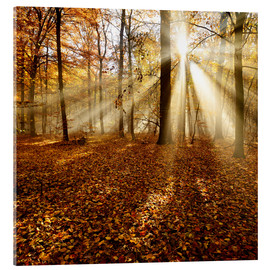 Acrylic print  Sunrays and morning fog - Andreas Vitting