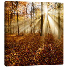 Canvas print  Sunrays and morning fog - Andreas Vitting