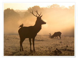 Premium poster Deer and jackdaw in the fog