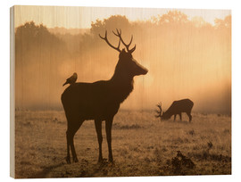 Alex Saberi - A Red deer with Western jackdaw in London Richmond Park