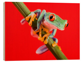 Wood print  Tree frog on red