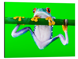 Aluminium print  colorful frog on green