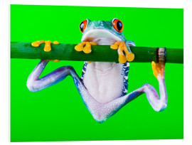 Forex  colorful frog on green