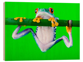 Wood print  Colorful Frog on Green Background