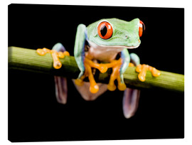 Canvas print  Tree frog on black