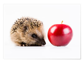 Premium poster  Hedgehog and apple