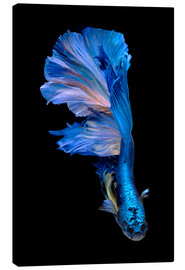 Canvas print  magnificent blue fish