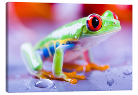 Canvas print  colorful frog