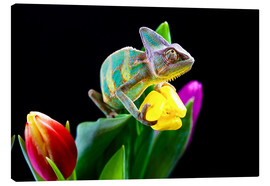 Canvas print  Chameleon on tulip blossom