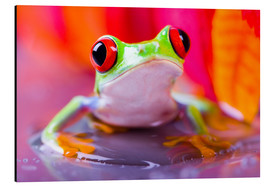 Aluminium print  little green frog