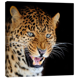 Canvas print  snarling leopard