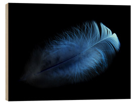 Wood print  blue feather