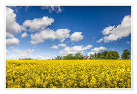 Premium poster  Spring in yellow and blue on Bornholm - Christian Müringer