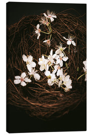 Canvas print  Cherry Blossoms in Nest - Sybille Sterk