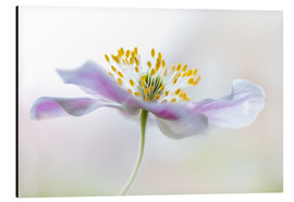Aluminium print  Nemorosa - Mandy Disher