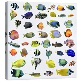 Canvas print  Fishes of the sea