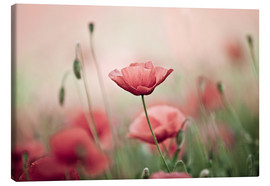 Canvas print  Poppies - Nailia Schwarz