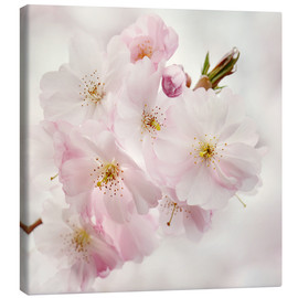 Canvas  cherry blossom - Atteloi