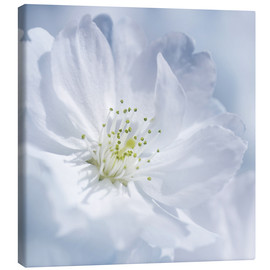 Canvas print  Cherry Blue - Atteloi