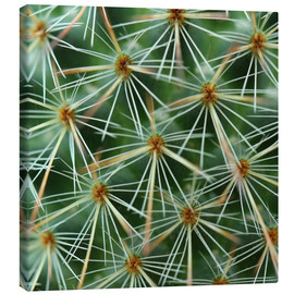 Canvas print  cactus pattern