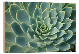 Wood print  Magnificent succulent