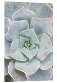 Acrylic glass  Pale green succulent plant