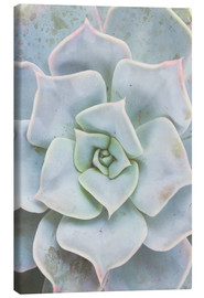 Canvas print  Pale green succulent plant