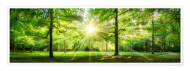 Premium poster Green Forest Panorama in sunlight
