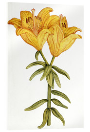 Acrylic print  Yellow Lily - French School