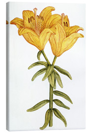 Canvas  Yellow Lily - French School