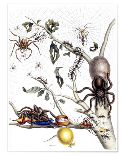 Premium poster Various Arachnids from South America