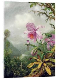 Acrylic print  Hummingbird perched on an Orchid Plant - Martin Johnson Heade