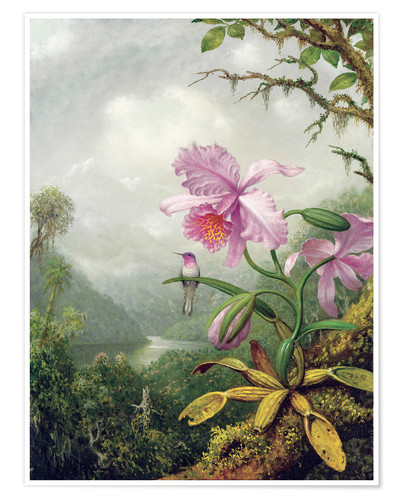 Premium poster Hummingbird Perched on an Orchid Plant
