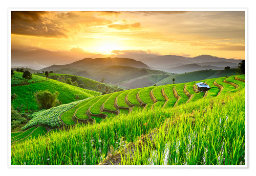 Premium poster landscape of Rice Terraces