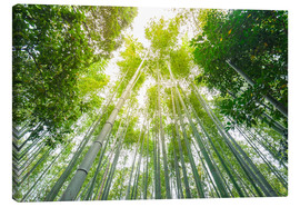 Canvas  Light falls through the bamboo forest