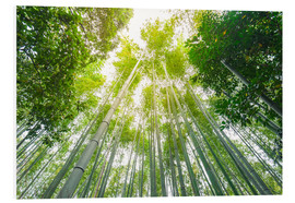 Forex  Light falls through the bamboo forest