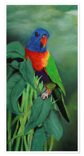 Premium poster colorful Rainbow lorikeet