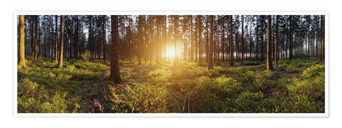 Premium poster Sunlight in deep forest