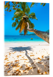 Acrylic print  Sea view with palm tree - Jürgen Feuerer