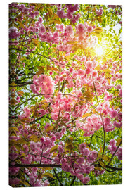 Canvas  Japanese decorative cherry - Steffen Gierok