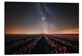 Aluminium print  Tulip field and Milky Way - Oliver Henze