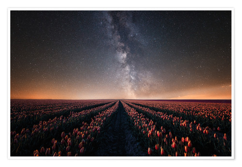 Premium poster Tulip field and Milky Way