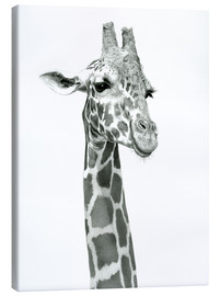 Canvas print  Sketch Of A Smiling Giraffe - Ashley Verkamp