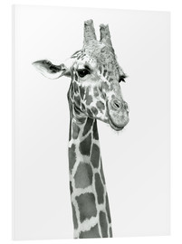 Foam board print  Sketch Of A Smiling Giraffe - Ashley Verkamp