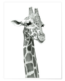 Premium poster Sketch Of A Smiling Giraffe