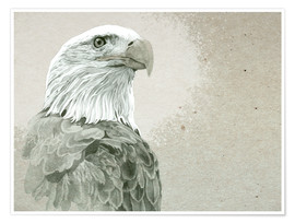 Premium poster  Bald Eagle Majestic - Ashley Verkamp
