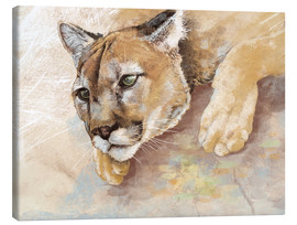 Canvas print  Captived Mountain Lion - Ashley Verkamp